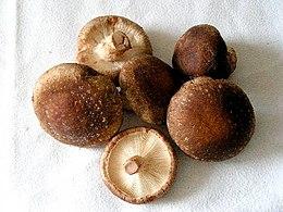 Immunerősítés gombával   Rákgyógyító shiitake