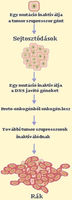 hashártya rák nci