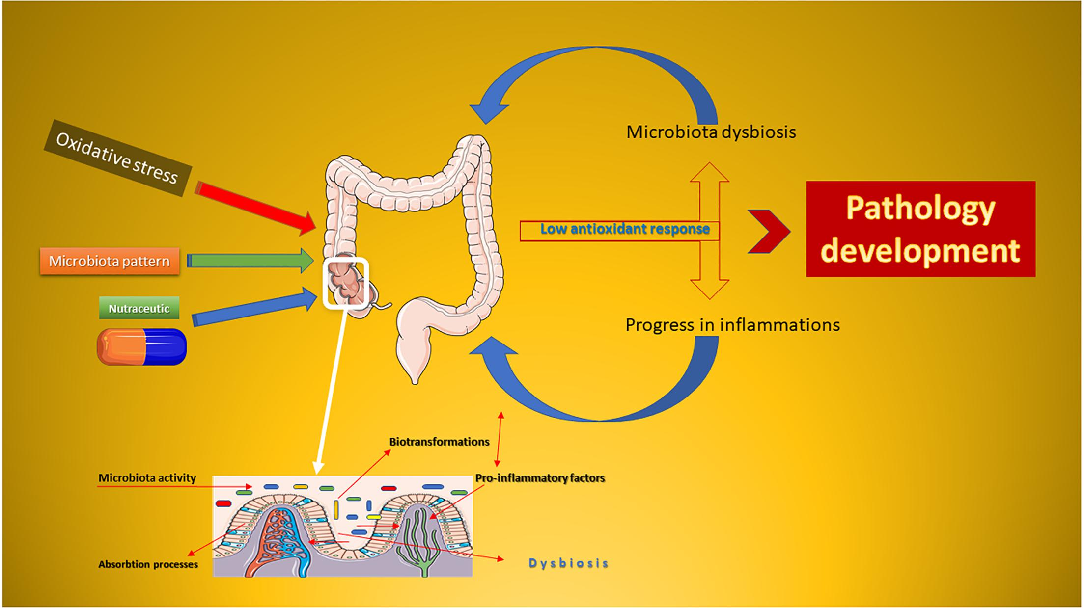 stressz dysbiosis hpv humán papillomavírus anogenitális fertőzés