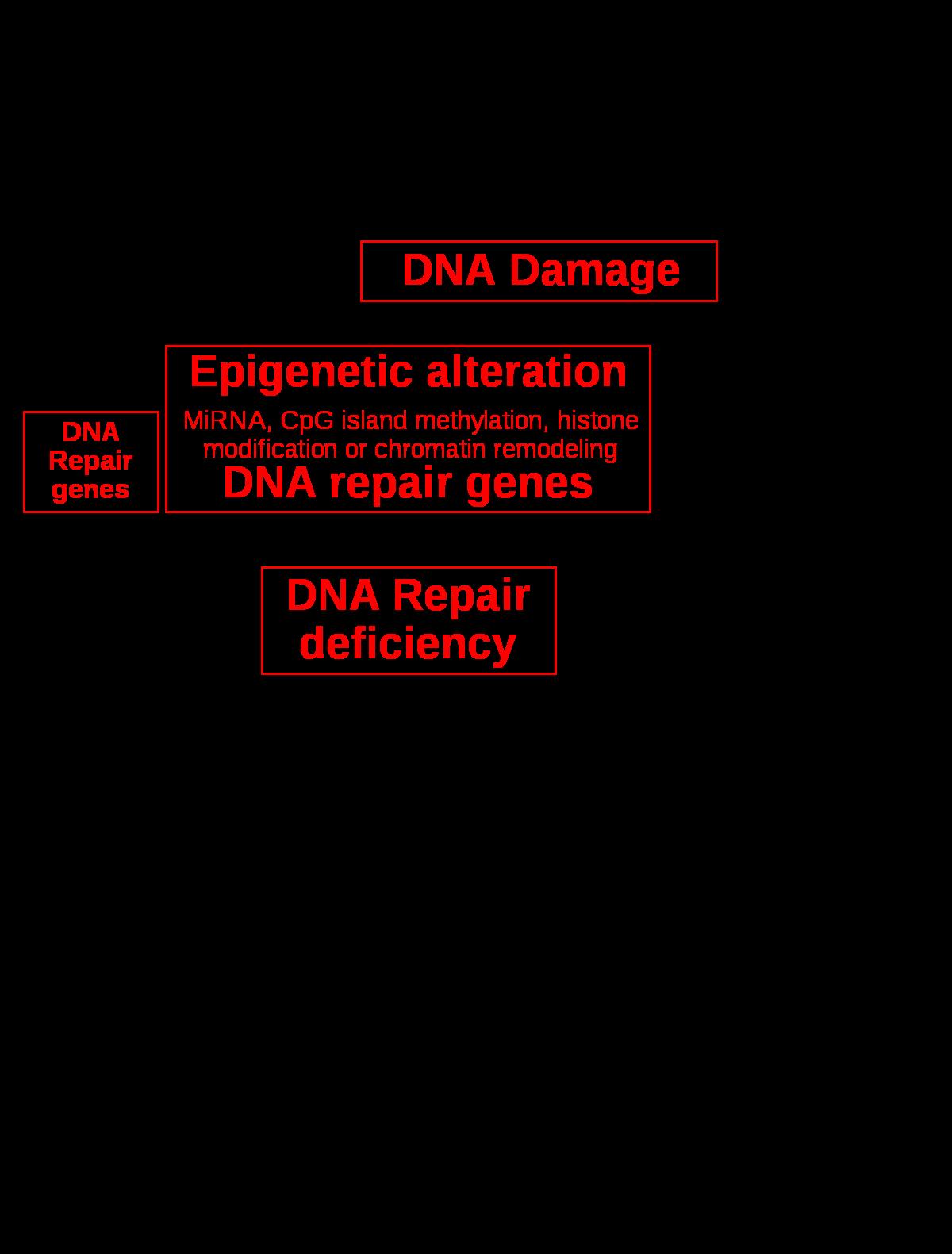 a petefészekrák genetikai
