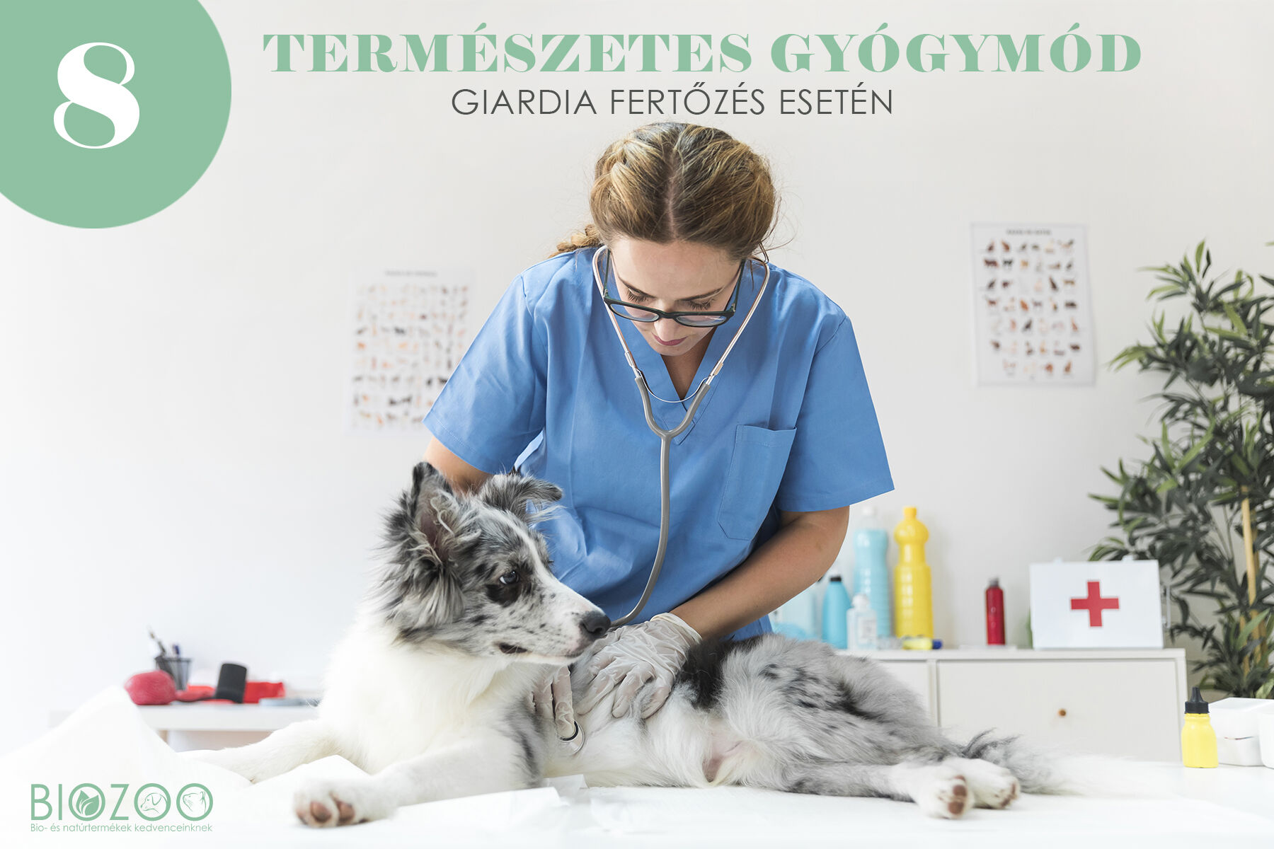 giardia kutyák kezelése