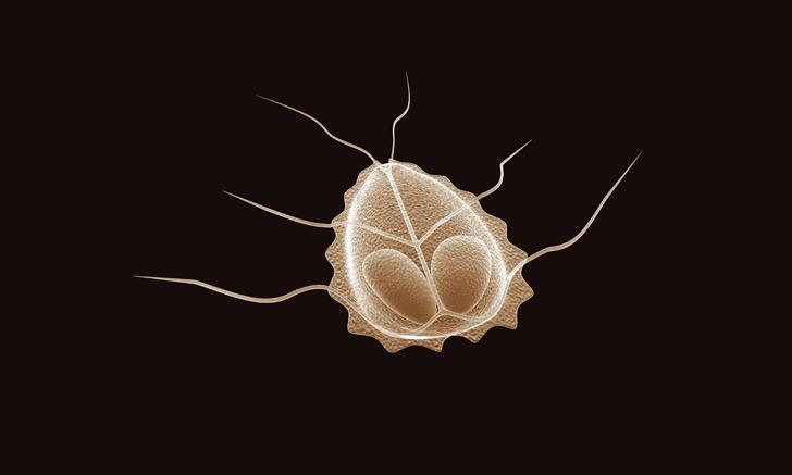 giardia spp rektális rák markerek