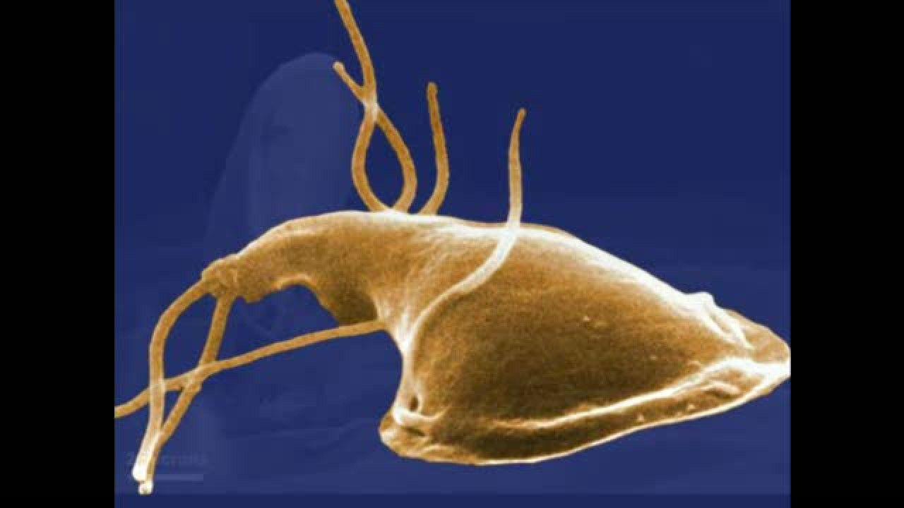 giardia bergen arsak pinworm baba gyógyszer