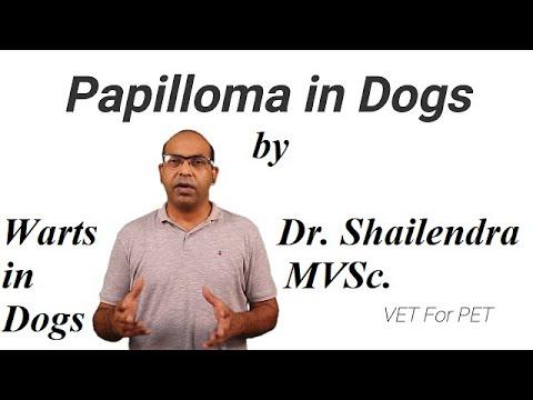 Rosszindulatú papilloma. Humán papillomavírus