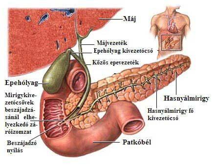 hashártya rák okai