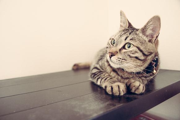 Giardia u kota objawy