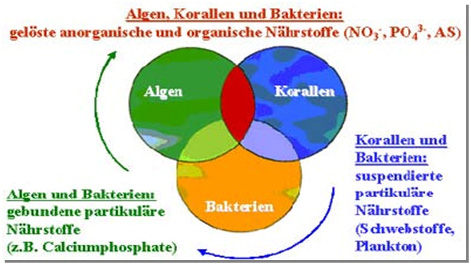 Oxigén meaning in Duits » DictZone Hongaars-Duits woordenboek