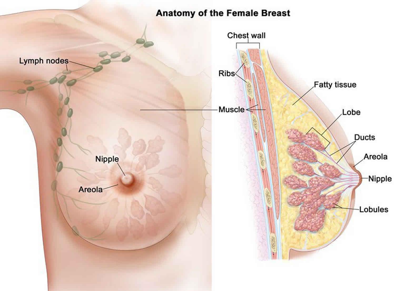 Hpv szemolcs ferfiaknal, HPV és herpesz különbözősége cancer colon metastases