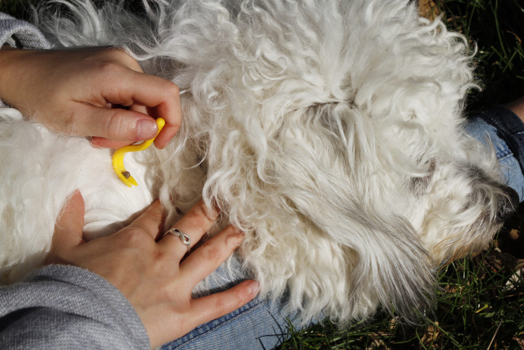 giardia hond knoflook