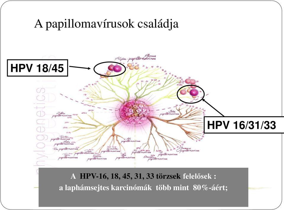 papillomavírus csoport 18 45