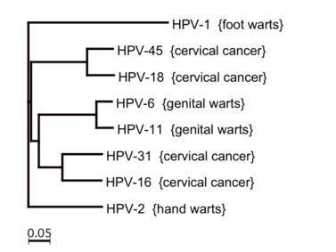 a condyloma abban nyilvánul meg hpv sárga spermium