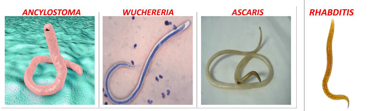 papillomavírus fertőzés és terhesség szemölcs a gyökérzeten