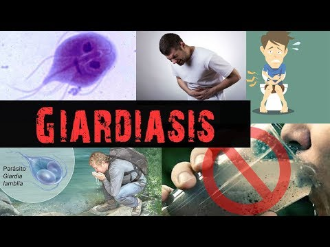 a különbség a giardia és a coccidia között