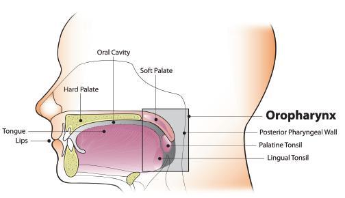 OTSZ Online - Második primer daganatok fej-nyaki laphámrákban