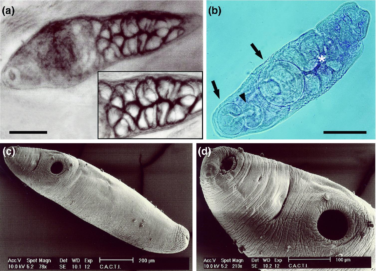 Protozoa paraziták