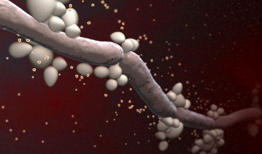 Mit csináljunk hüvelyi fertőzés esetén?