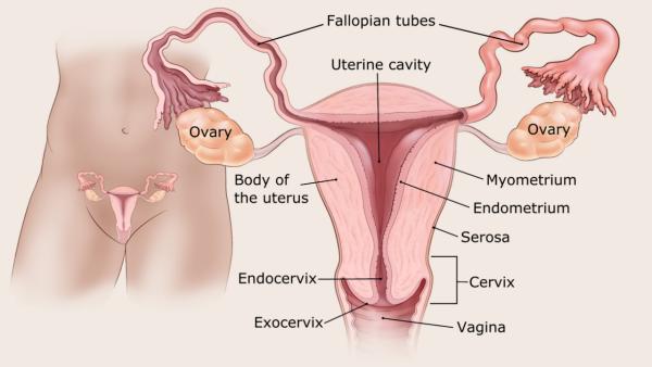 az endometrium rákra vonatkozó irányelvei