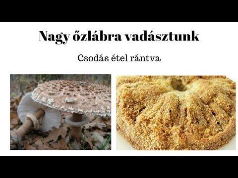 a gombák és férgek testének tisztítása