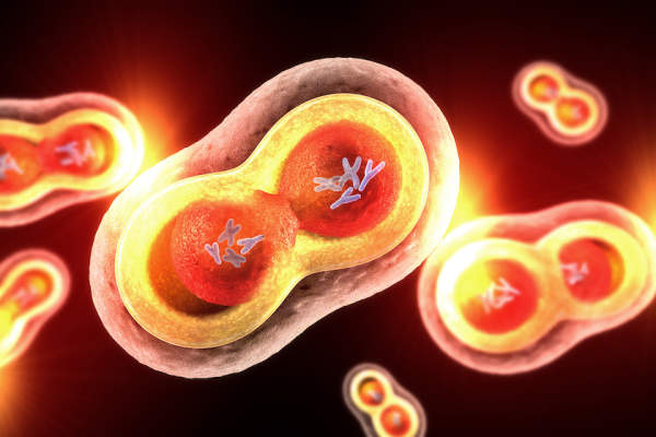 endometrium rák msi h a nyaki szemölcsök az