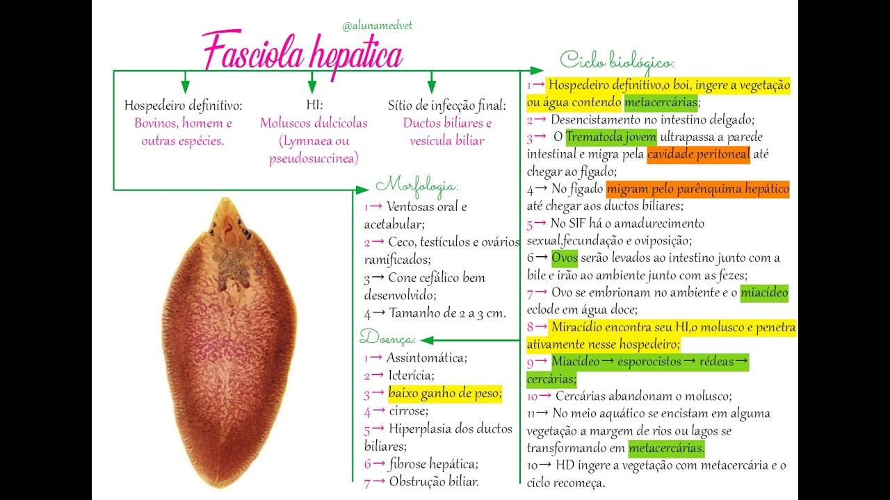 fascioliasis okozta mit kell enni szemölcsökkel