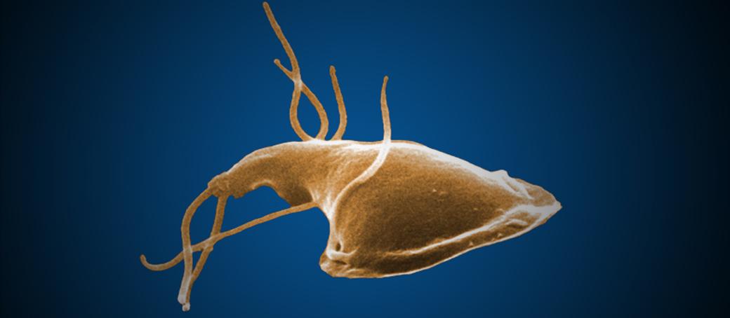 Az agyi paraziták tünetek féreg alattad