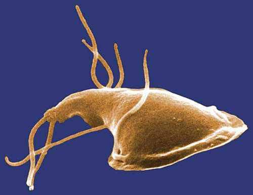 papilloma virus vírus előnyei és hátrányai
