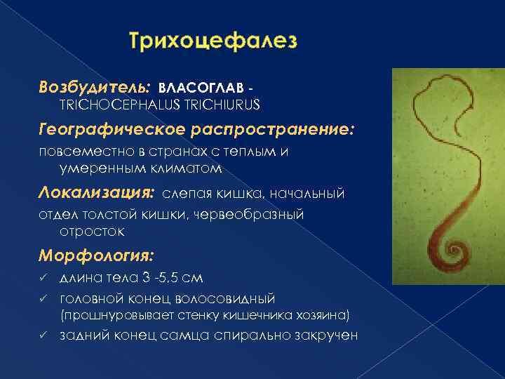 helix trichocephalus
