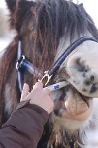 hogyan kell kezelni egy féreg lovat