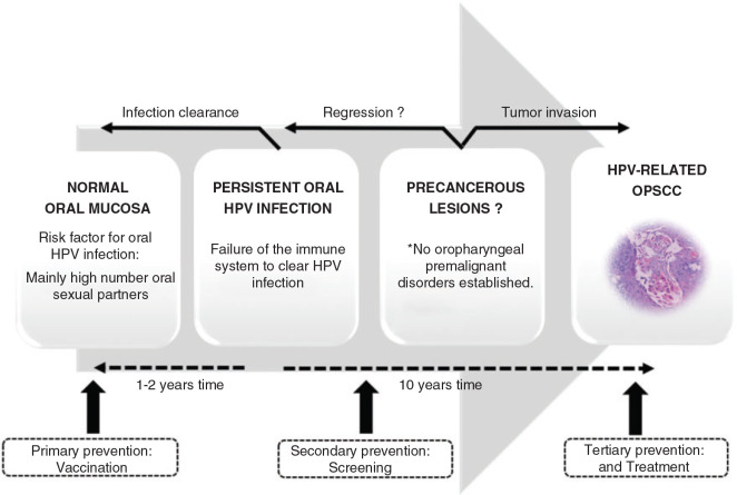 korhadt kerek farkas baktérium dysbiosis ibd