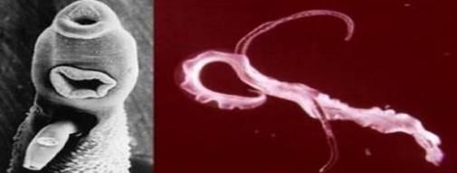 kenőcsök a papilloma vírusfertőzés áttekintésére helmintox lv