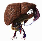metasztatikus rák a máj prognózisában