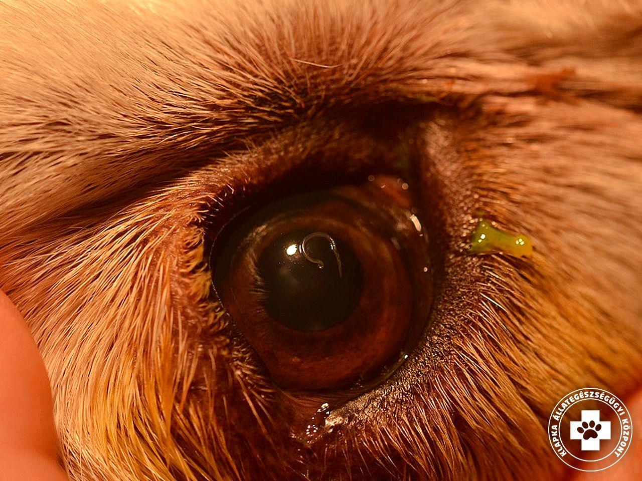 Állatkert orvos féregtabletta vélemények. Tünetek és a szalagféreg kezelése az emberekben