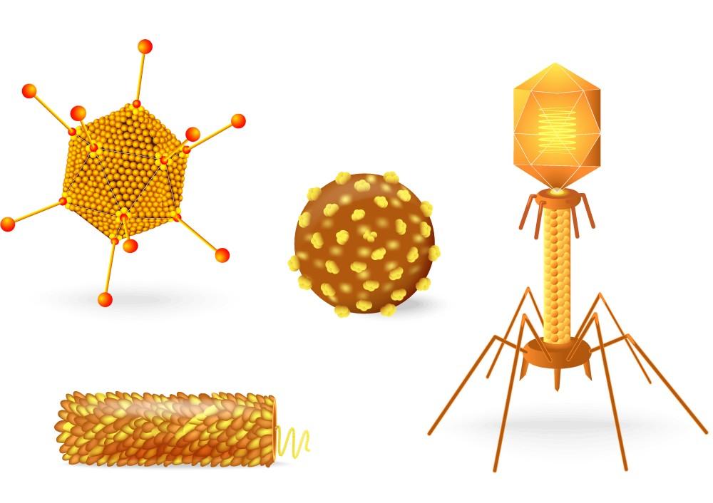 vírus vírus