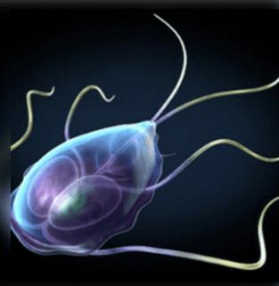Madár emberi paraziták. 9 félelmetes élősködő, ami akár benned is ott lehet