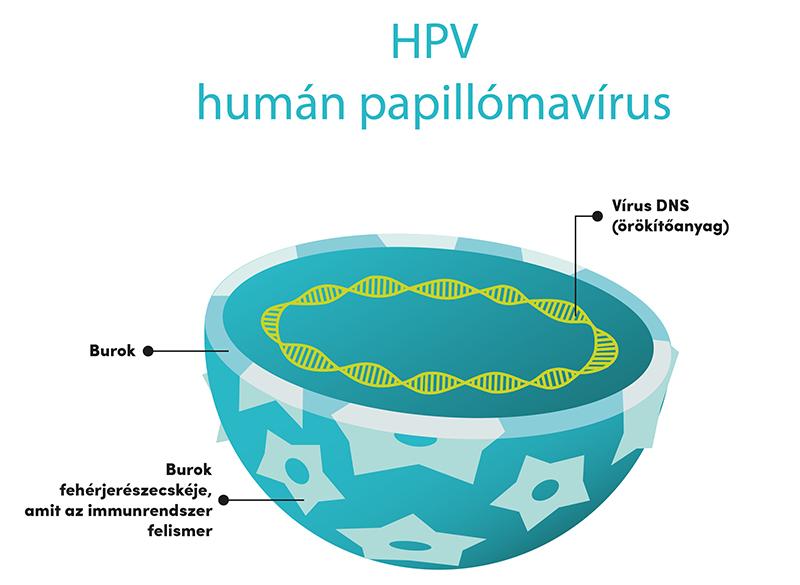 emberi papillomavírust okozhat papilloma szerű elváltozások