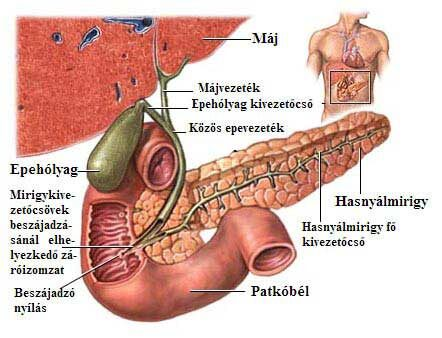 epeúti rák tünetei
