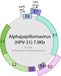 giardia, amíg a tünetek tartanak A papilloma vírus nyállal támad